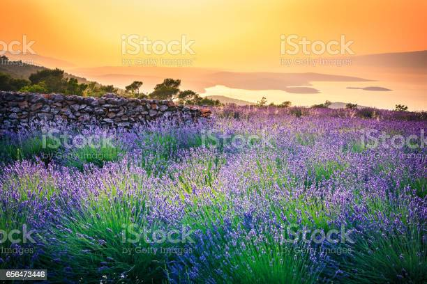 Sunset Over Lavender Field Landscape Stock Photo - Download Image Now