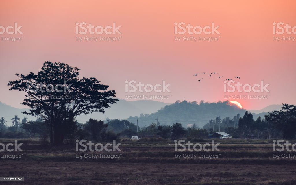 Sunset over mountain with birds flying in countryside