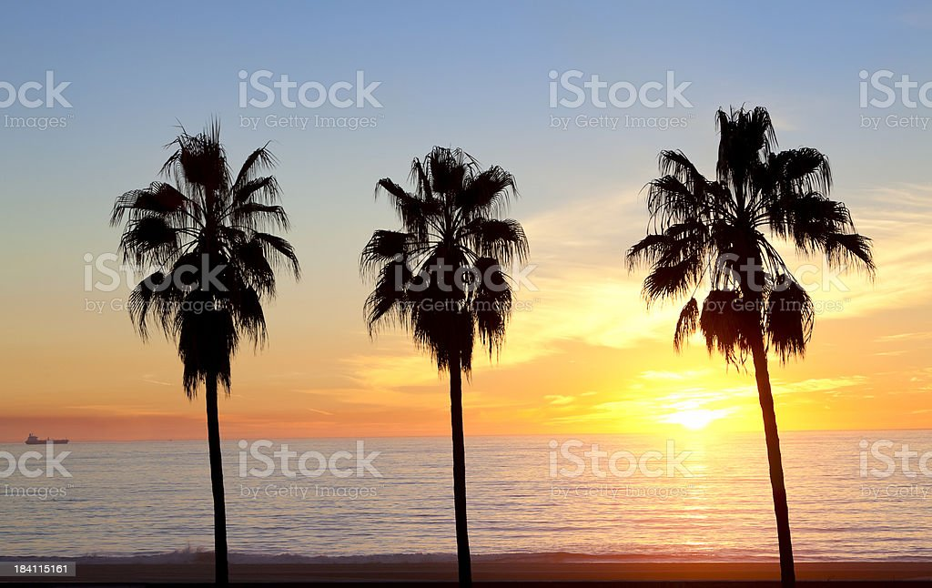 Sunset Over Palm Trees stock photo