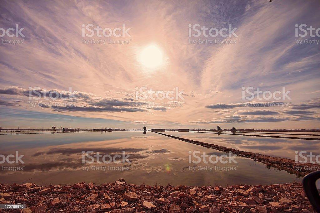 Sunset over rice field stock photo
