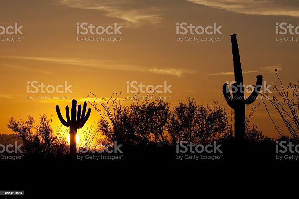 Sunset over Sonoran Desert and Saguaro National Park  Arizona royalty-free stock photo