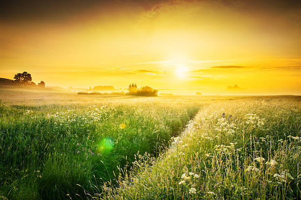 Sunset over Spring Foggy Meadow - Farmland Landscape stock photo