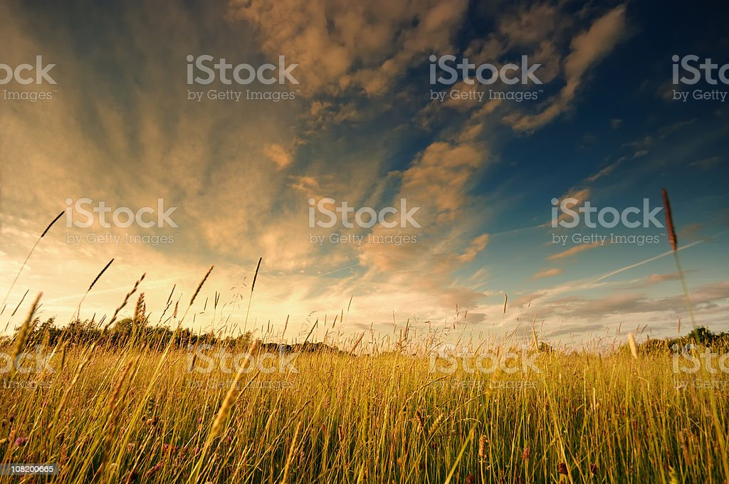 Sunset over summer field royalty-free stock photo