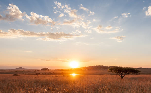 sunset over the african plains - safari stock photos and pictures