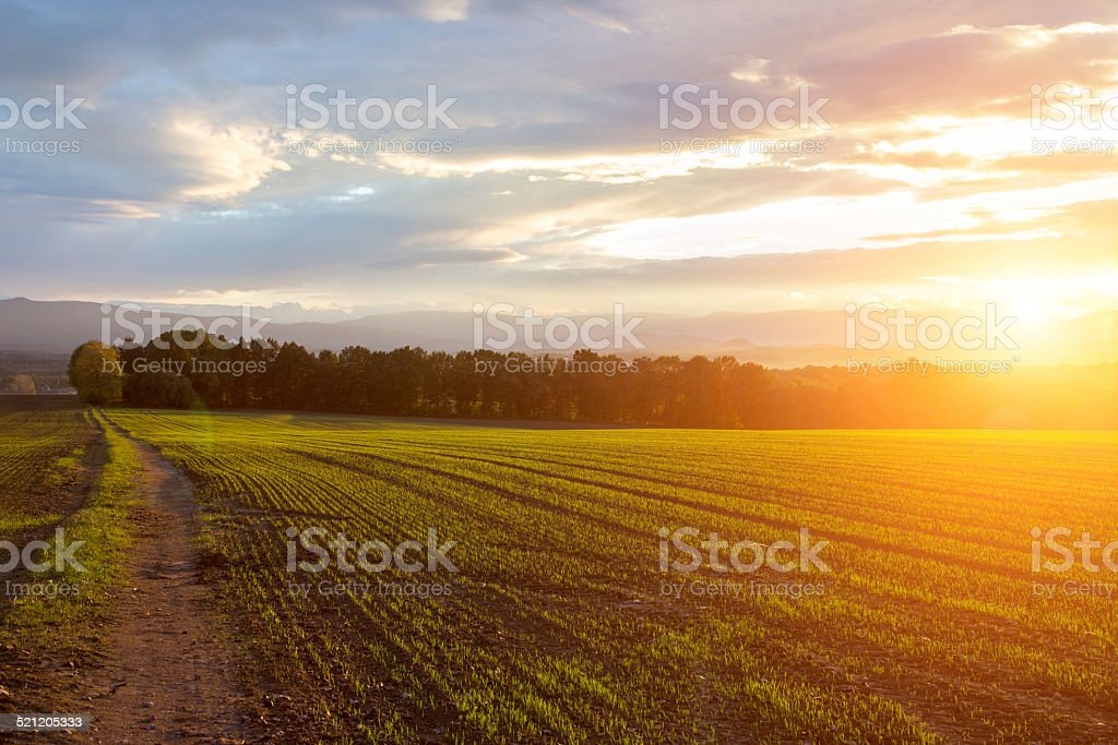 Sunset over the field stock photo