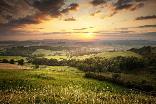 sunset over the green hills countryside in england, dorset - 田園風光 個照片及圖片檔