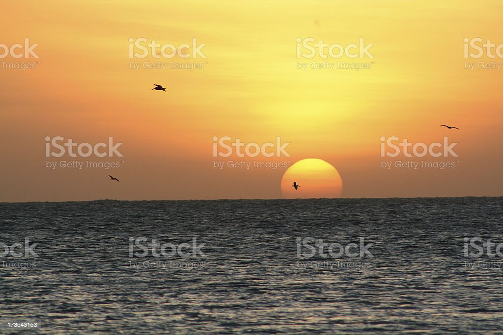 Sunset over the ocean with birds stock photo