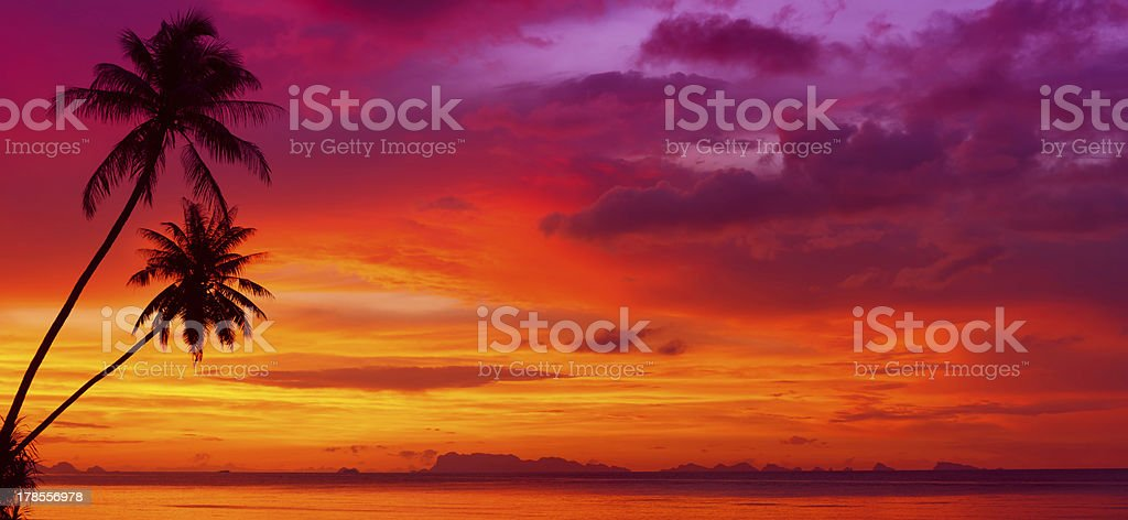 Sunset over the ocean with tropical palm trees silhouette stock photo