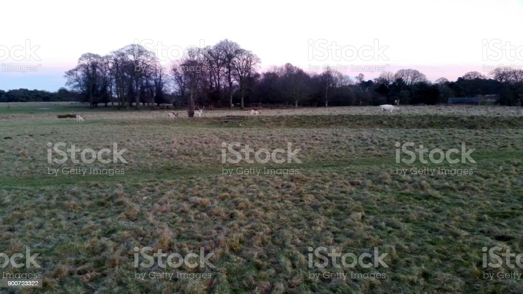Sunset over the Tatton Park with herd of deer in background - Tatton Park Gardens,  Knutsford, United Kingdom stock photo