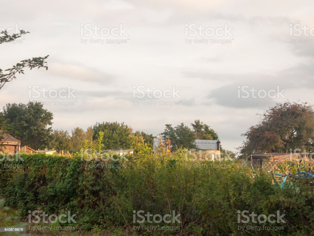 sunset over the tops of an allotment garden sheds outside stock photo