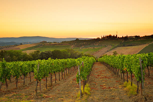 Sunset over the vineyard from Tuscany stock photo