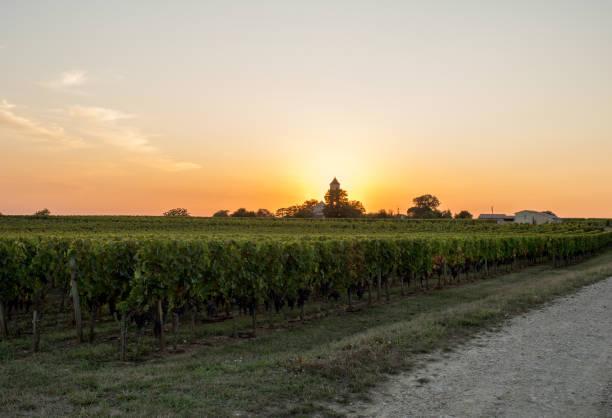 Sunset over the vineyards of Montagne near Saint Emilion. Gironde, Aquitaine. France stock photo