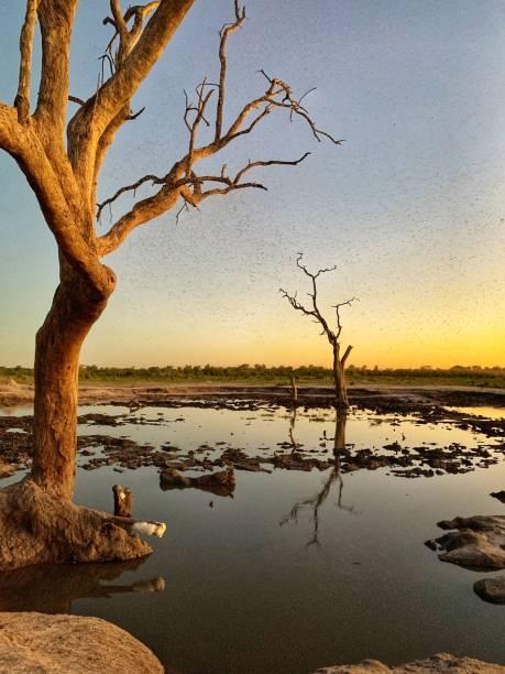 Sunset over the waterhole in Hwange National park,Zimbabwe stock photo