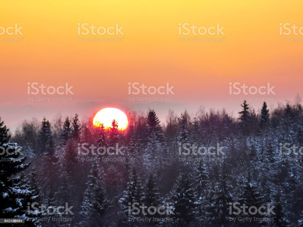 Sunset over the winter taiga. The sun sits behind the trees. stock photo