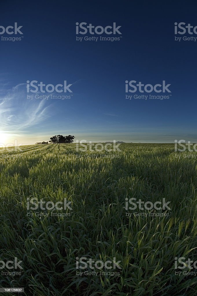 Sunset over wheat farm royalty-free stock photo