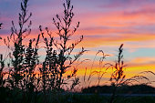 Scenic close-up of weeds, forest on the horizon and an orange sunset cloudy sky.