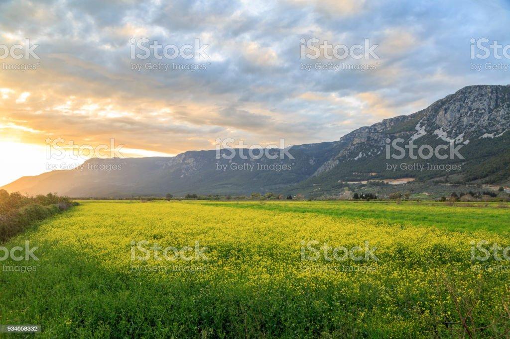 Sunset over yellow meadows near mountains in Gokova, Turkey stock photo