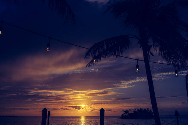 Sunset, palm tree and party lights stock photo