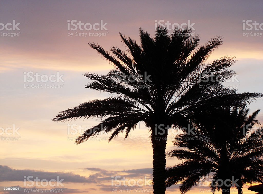 Sunset Palms stock photo