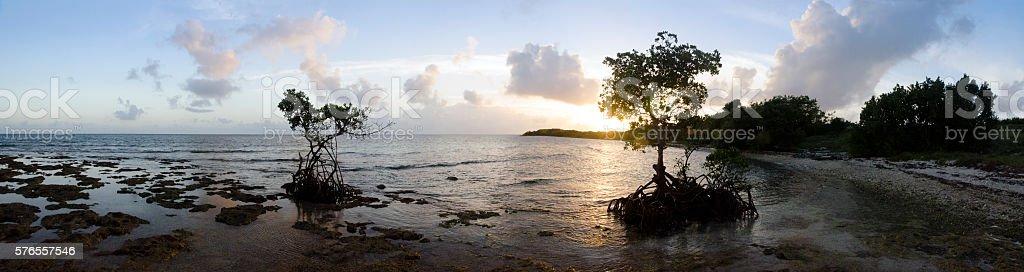 Sunset Panorama with Heart Shape Mangrove stock photo