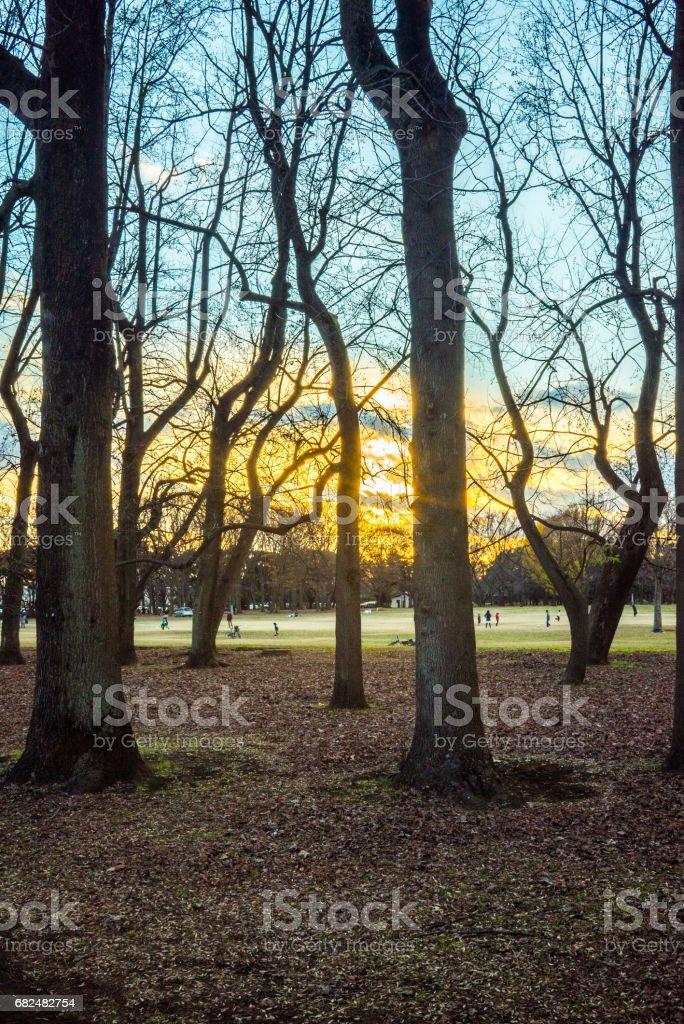 Sunset park Стоковые фото Стоковая фотография