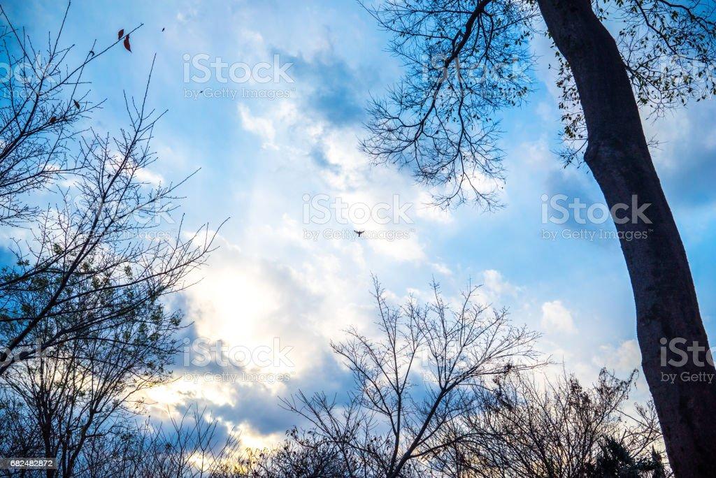 Sonnenuntergang-park Lizenzfreies stock-foto