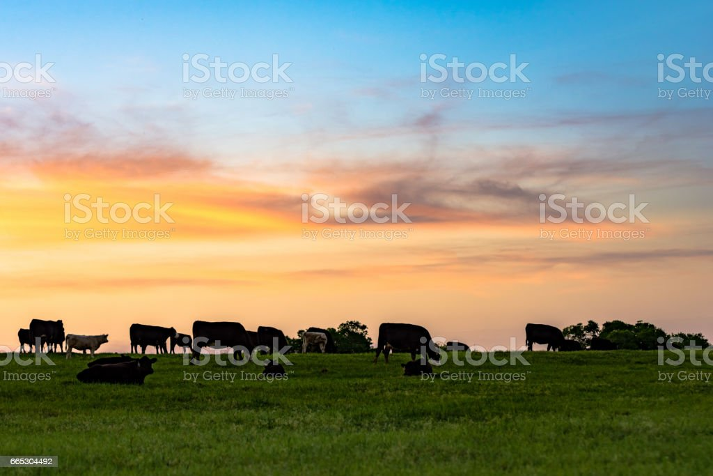 Sunset Pasture stock photo