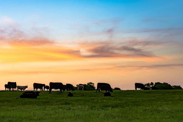 Sunset Pasture stock photo