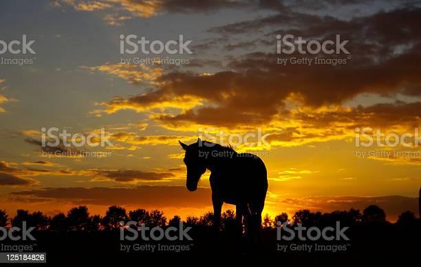 Sunset picture id125184826?b=1&k=6&m=125184826&s=612x612&h=ibdyi6c2omudxwtnrokp2doxpsdloktxqk5p haevic=