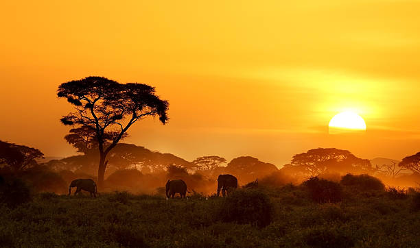 Sunset Sunset in Amboseli. east africa stock pictures, royalty-free photos & images