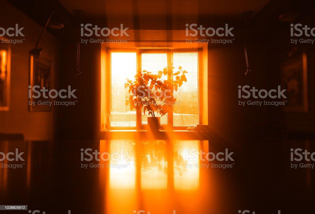 Sunset plant near windows background stock photo