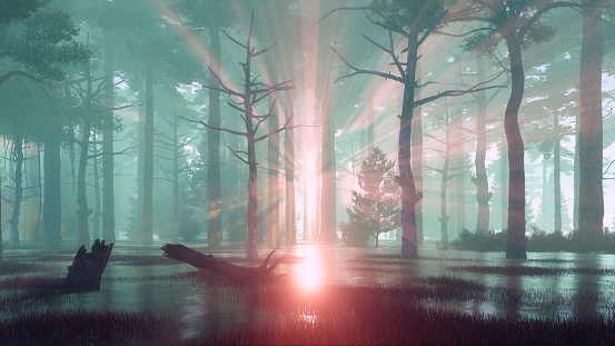 Sunset rays in swampy forest at misty dawn or dusk