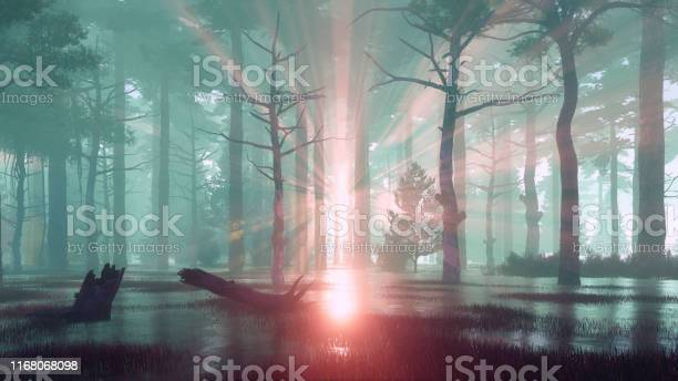 Photo of Sunset rays in swampy forest at misty dawn or dusk