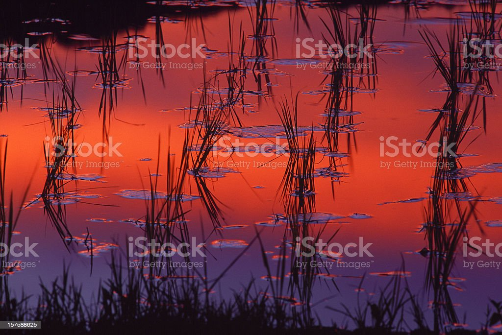sunset reflection in paddy field royalty-free stock photo
