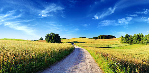Sunset Rolling Landscape - Dirt Road, Meadows and Wheat Fields stock photo