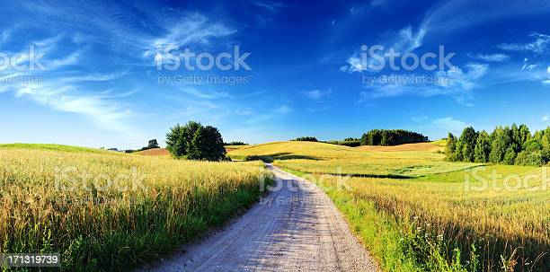 Sunset Rolling Landscape Dirt Road Meadows And Wheat Fields Stock Photo - Download Image Now