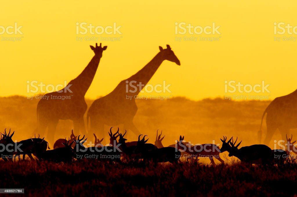 Sunset scene in Etosha National Park, Namibia stock photo