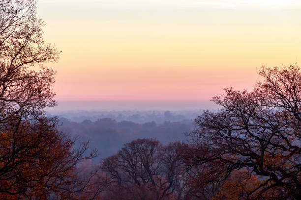 sunset seen from richmond park - richmond park stock photos and pictures