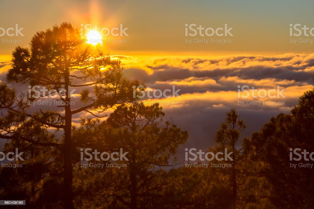 Sunset seen from the forest above clouds royalty-free stock photo