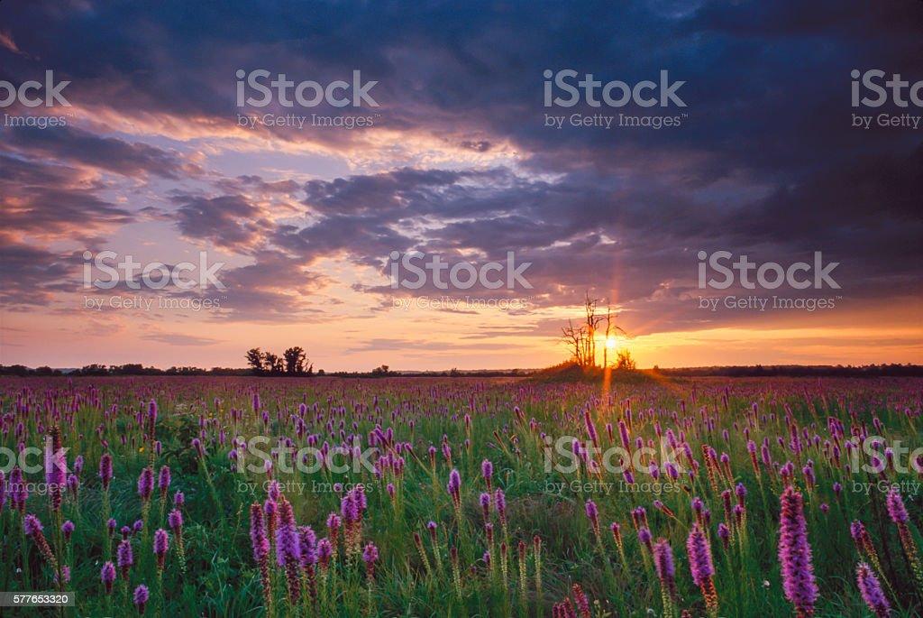 Sunset Shaft of Light, Cherokee Prairie, Arkansas stock photo
