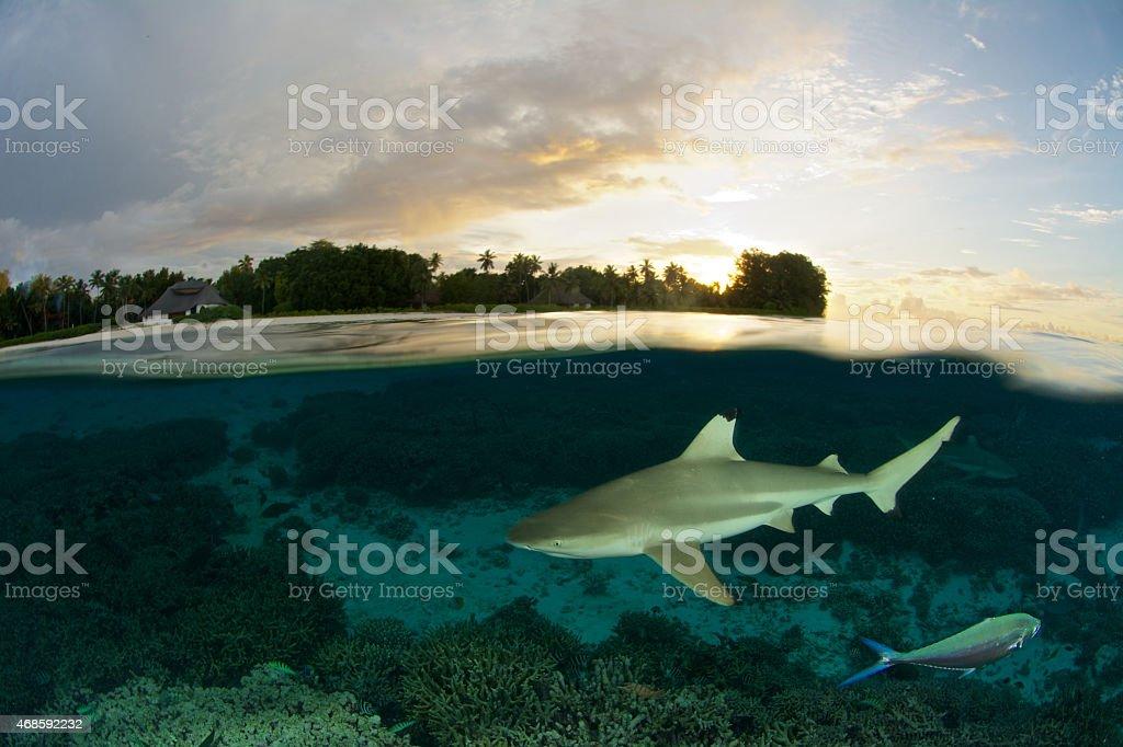 sunset shark stock photo