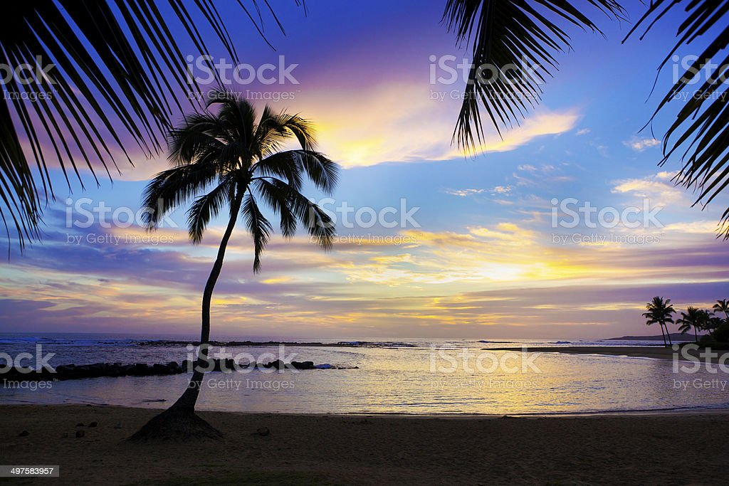 Sunset Sihouette Palm Tree on Poipu Beach of Kauai Hawaii stock photo