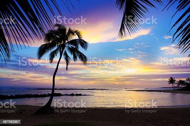 Photo of Sunset Sihouette Palm Tree on Poipu Beach of Kauai Hawaii