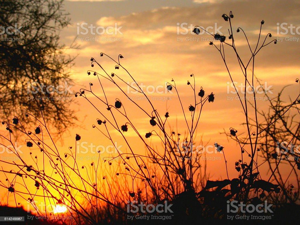 Sunset silhouette stock photo