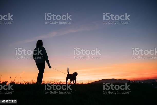 Sunset silhouettes woman and dog on the walk picture id664752920?b=1&k=6&m=664752920&s=612x612&h=mapjyzhwpqxoe86mpk47dhohjj0 dawqma1mpayqldk=