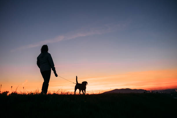 Sunset silhouettes woman and dog on the walk picture id664752920?b=1&k=6&m=664752920&s=612x612&w=0&h=wm0rda2p4xvxwzcpgncjsjyumw2gkfpkhffeclmozdg=