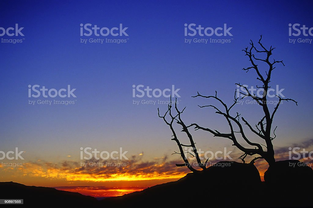 sunset sky and abstract tree silhouette landscape royalty-free stock photo