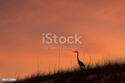 Sunset image of sky and dunes with blue heron silhouette