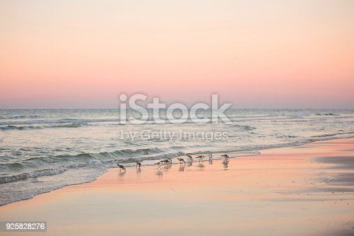 Sunset image of ocean with birds