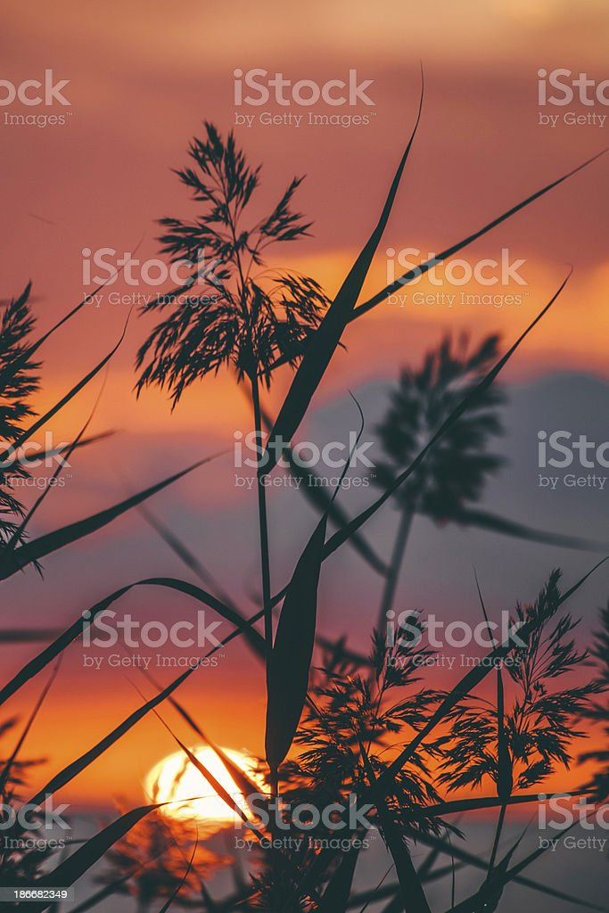 Sunset sky. royalty-free stock photo